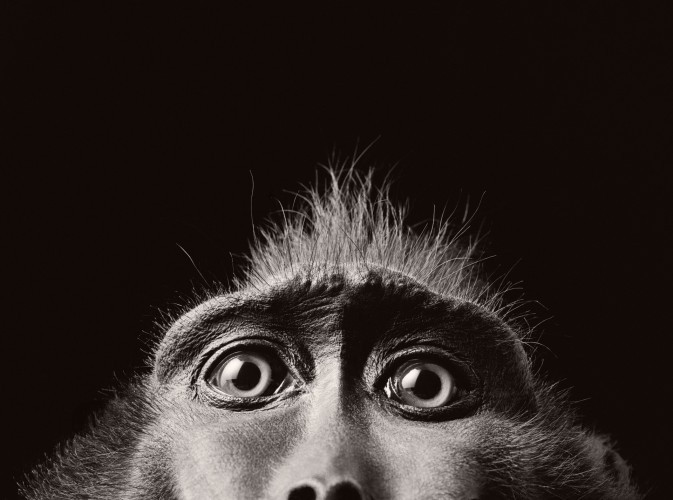 Tim Flach-MonkeyEyes