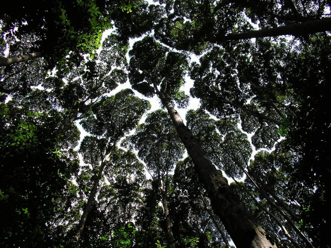 Mike Norton-Crown Shyness